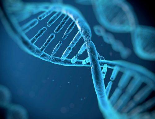 Génétique des abeilles, abeilles VSH et SMR