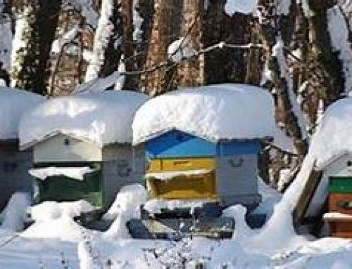 Conférence : réussir l'hivernage de ses abeilles